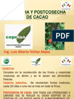 Cosecha y Postcosecha de Cacao