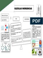 Organizador Visual Biomoleculas Inorganicas