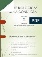 Bases Biologicas de La Conducta Humana