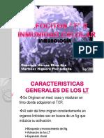 Linfocitosteinmunidadcelular12 Sep 2013 130913222702 Phpapp01