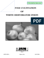 Cultivation of White Onion