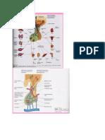 Histologi Print Endokrin