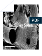 15. Respiratory System