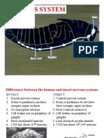 10. Nervous System