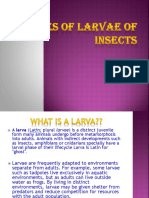 Types of Larva