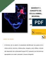 Sesion 3 Neurona - Glía - Sinapsis