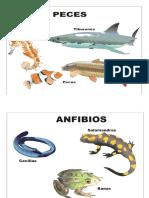 Mural Animales