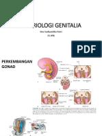 Embriologi Genitalia