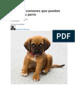 10 Cosas Comunes Que Pueden Matar a Tu Perro