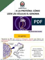 Clase 5 Del ADN a Las Proteinas