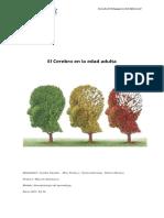 El Cerebro en La Edad Adulta, Grupo 8