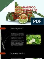 Bergamota -Diapos