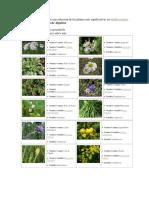 continuación presentamos una selección de las plantas más significativas en.docx