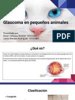 Glaucoma en Pequeños Animales