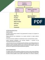 Sistema Endocrino Difuso