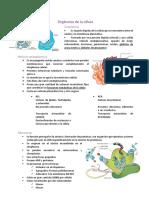 Biología básica y genética
