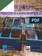 Produccion de Alevines Revertidos de Tilapia