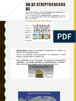 Estructura de Streptococcus Pneumoniae