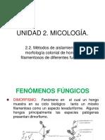 UNIDAD 2 2 Micologia