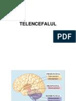 telencefalul