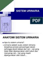 LO Anatomi