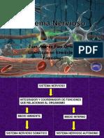 2.- Sistema Nervioso