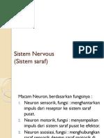 Sistem Nervous (Sistem Saraf)