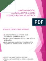 Presentacion Segudno Premolar Inferior Fa