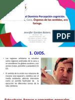 Parte 2. Organos de Los Sentidos-ilovepdf-compressed