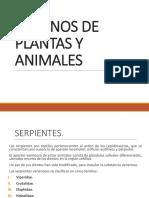 Venenos de Plantas y Animales