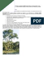 El Chaco y Sus Ambientes 1