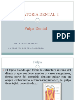 Operatoria Dental Exposicion