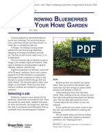 Growing blueberries.pdf