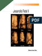 Desarrollo fetalUDP2