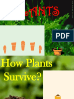 Plants Form and Function