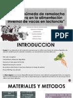 Coseta Húmeda de Remolacha Azucarera en La