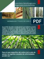Componentes Biológicos de Un Agroecosistema