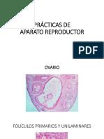PRÁCTICAS DE APARATO REPRODUCTOR.pptx