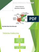Sistemaendocrino1