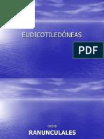 9_Eudicotiledoneas_tricolpadas_.ppt