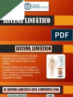 Ppt Sobre Sistema Linfatico
