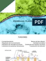1-MembranaCelular
