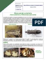 Boletin 2016 01 Polillas Patata