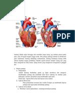Anatomi Sesak Napas Kardiovaskuler