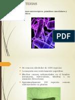 Infoagronomo.net Bacterias Fitopatogenas