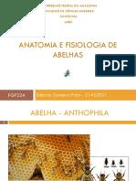 Anatomia e Fisiologia de Abelhas (1)