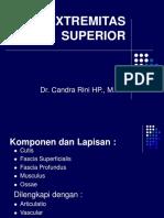 Surface Extremitas Superior Maret 2012