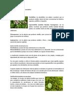 Clasificación de las plantas vasculares.docx