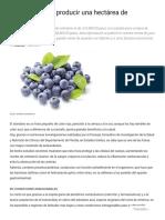 ¿Cuánto cuesta producir una hectárea de arándano_ - Tierra Fértil® Multimedia Editorial