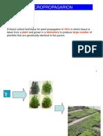 lectut-BTN-303-pdf-Micropropagation.pdf